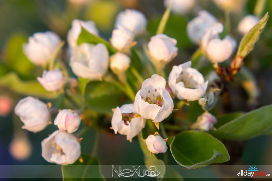 Я люблю все цветы, выпуск 21510f8.