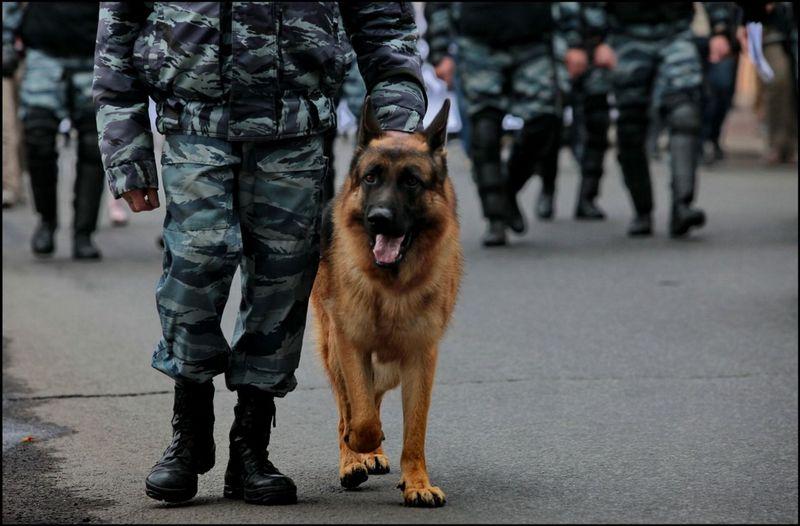 Лучшие породы собак для службы в полиции