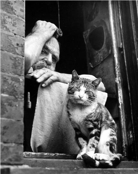 Про старого кота