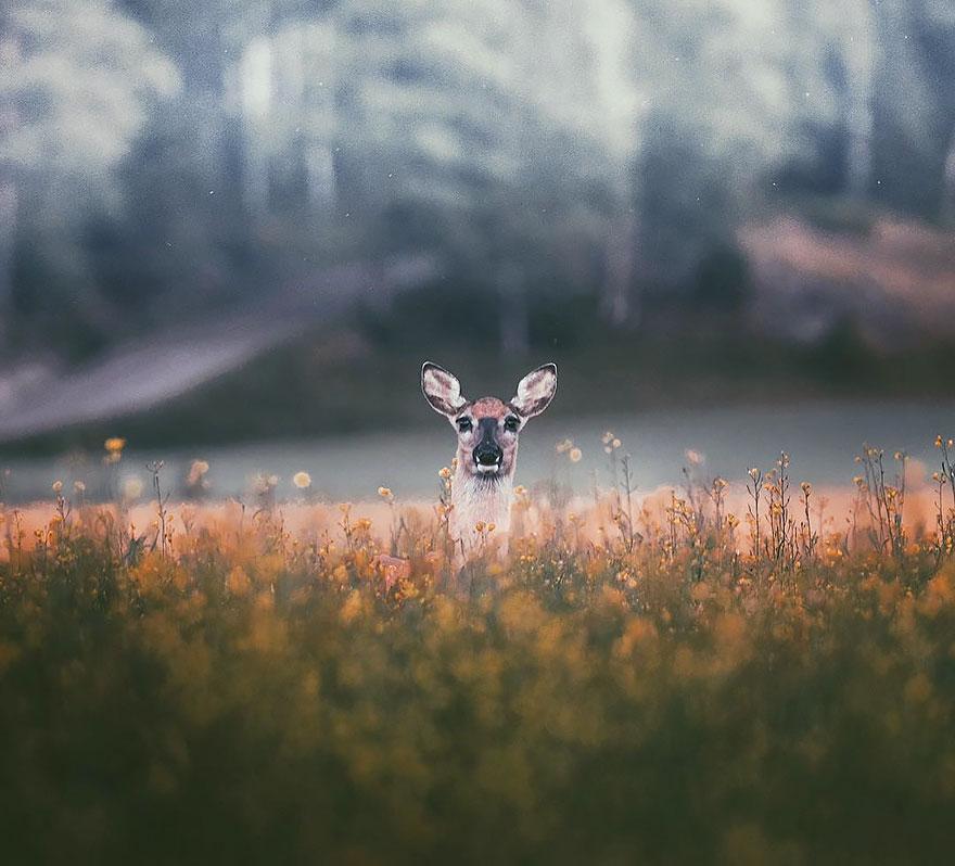 Лесные истории Konsta Punkka