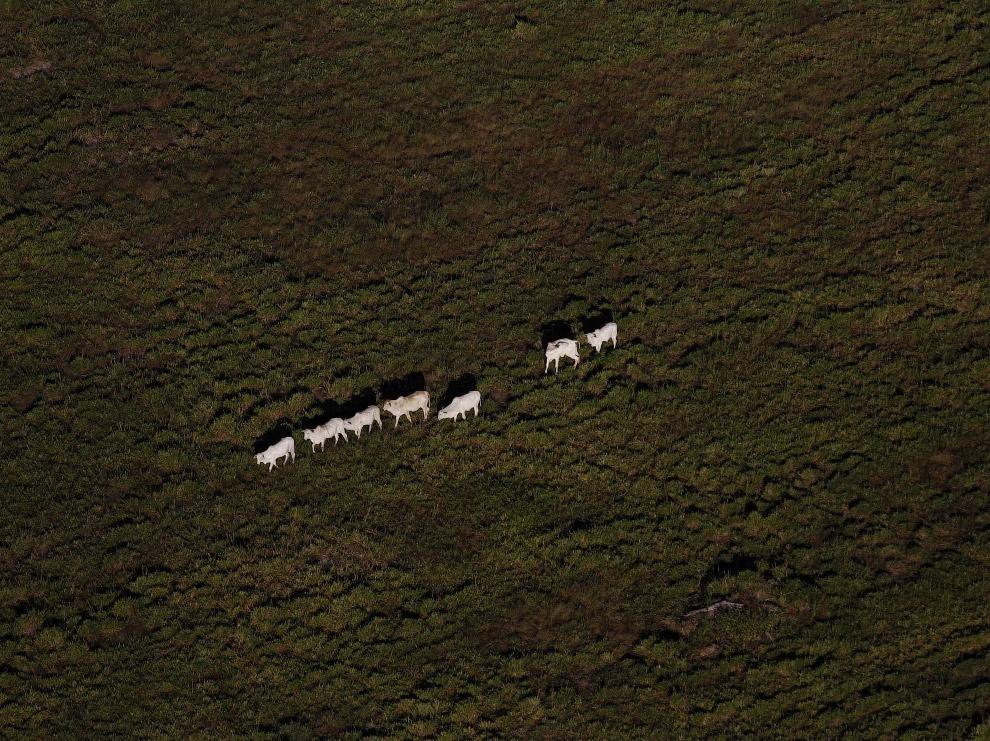 23. Высохшие реки в регионе Пилбара, Западная Австралия. (Фото David Gray):