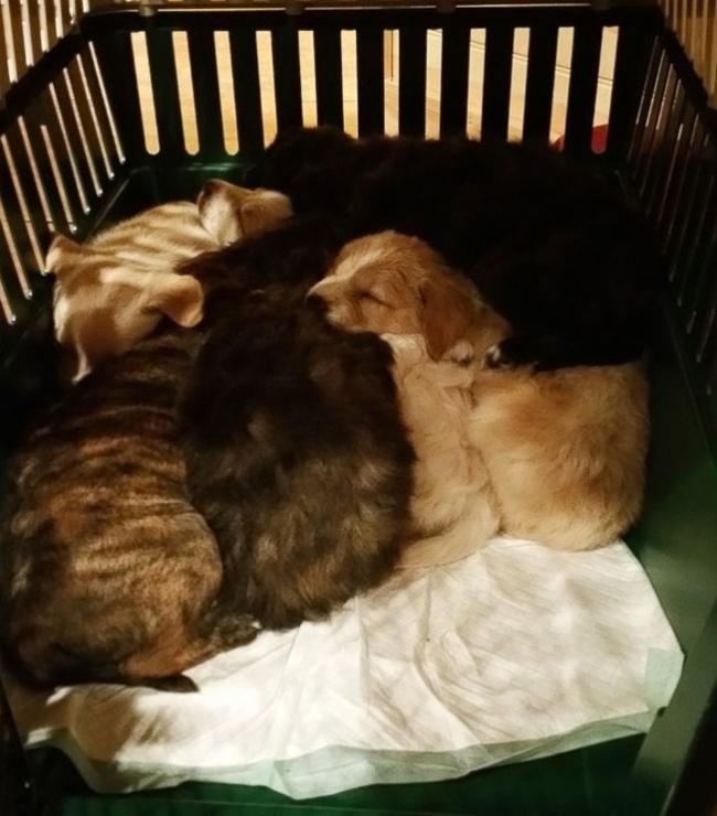 © Trevor Jennings / facebook.com  Мужчины забрали щенков вдом, где отмыли ихотблох игрязи.