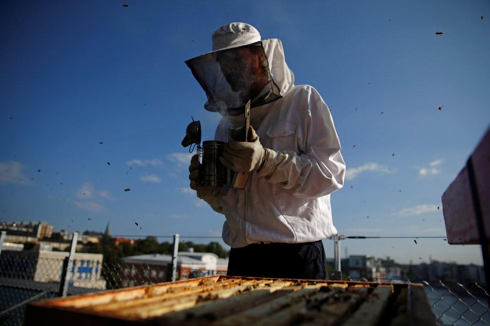 8. Пчелки. (Фото Maxim Shemetov | Reuters):