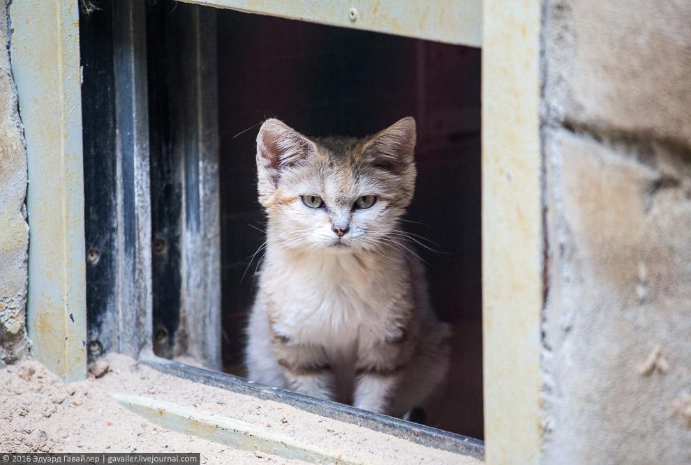 14. Ржавая кошка, или пятнисто-рыжая кошка. Обитает на Шри-Ланке и в Индии.