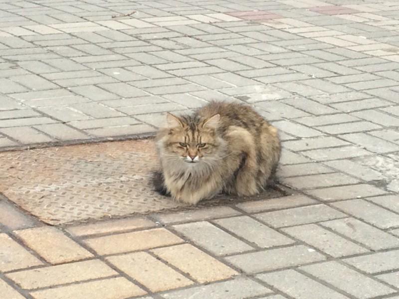 Местные жалеют кота и подкармливают его.