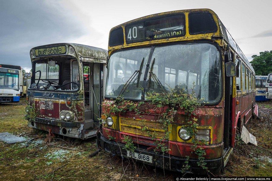 Совершенно не разбираюсь в моделях и типах ирландских и английских автобусов. Но они тут все разные,