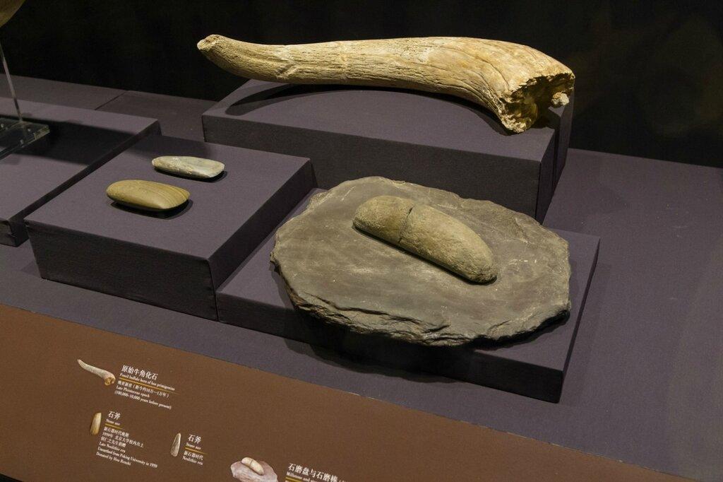 Каменные орудия и бивень, каменный век, Музей района Хайдянь