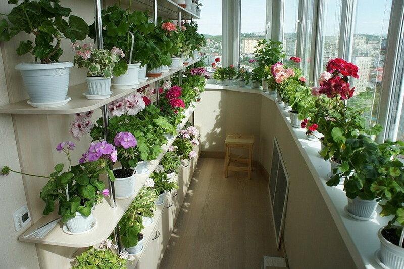 Балконы в цветах