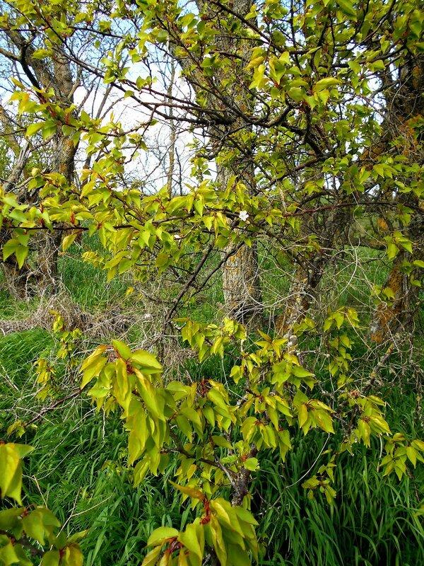 В тонах весенней свежести зелёной ... DSCN5263.JPG