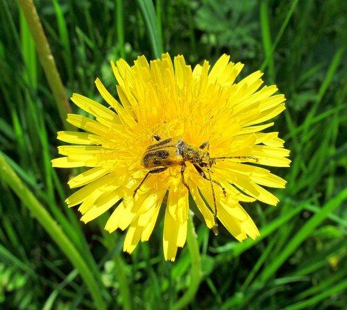 В жёлтой пыльце
