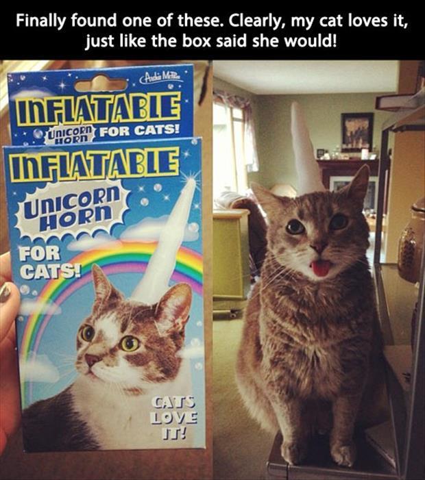 funny-cats-34.jpg