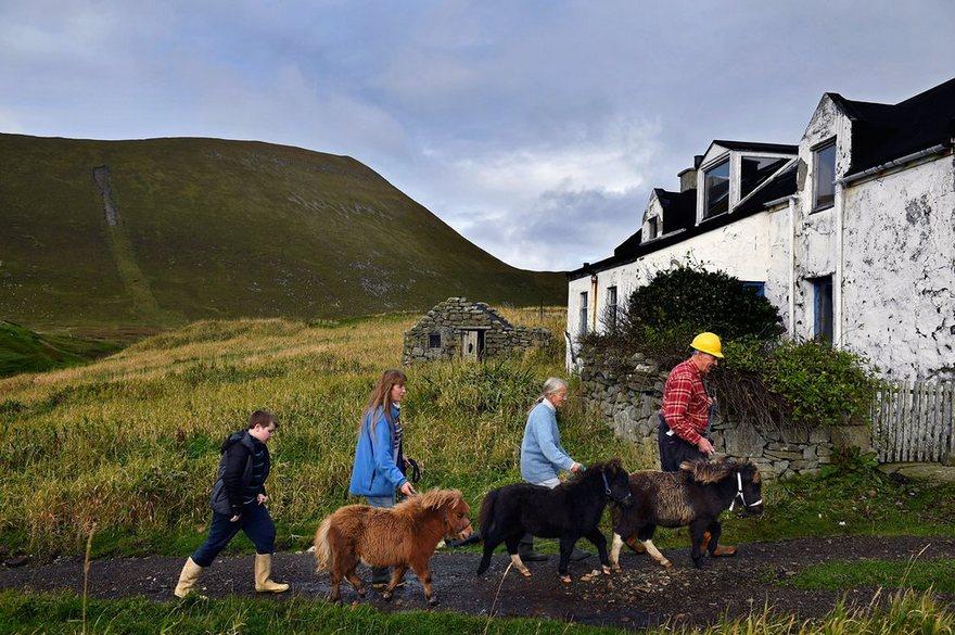 Остров, где проживает больше миниатюрных лошадок, чем людей