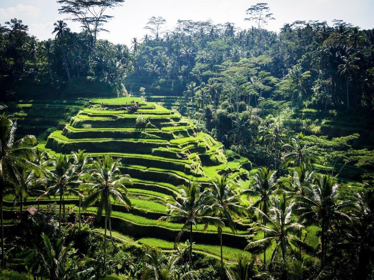 Некоторые считают, что в такое спокойное место, как Убуд на Бали, нужно приезжать одному — так лучше
