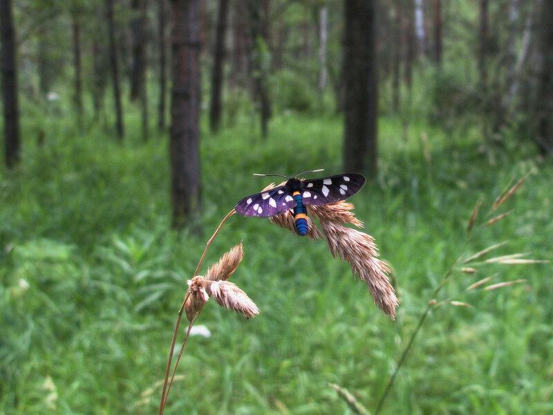 Бабочкин лес