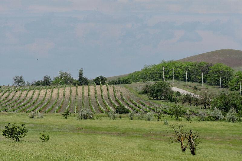 Виноградные долины