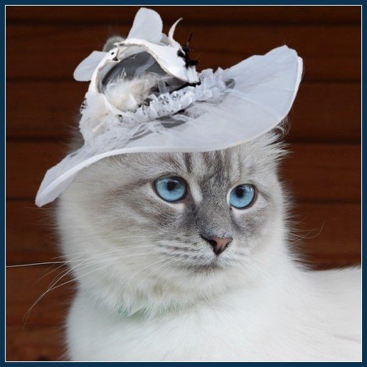 Астра в шляпке
