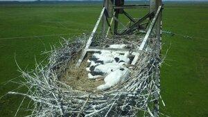 Энергетики Дальнего Востока готовятся к гнездованию аистов