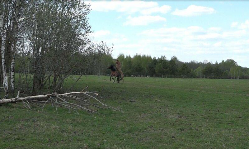 Тверская область, деревня Верхняя Троица, Снайп