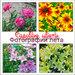 Садовые цветы. Фотографии лета
