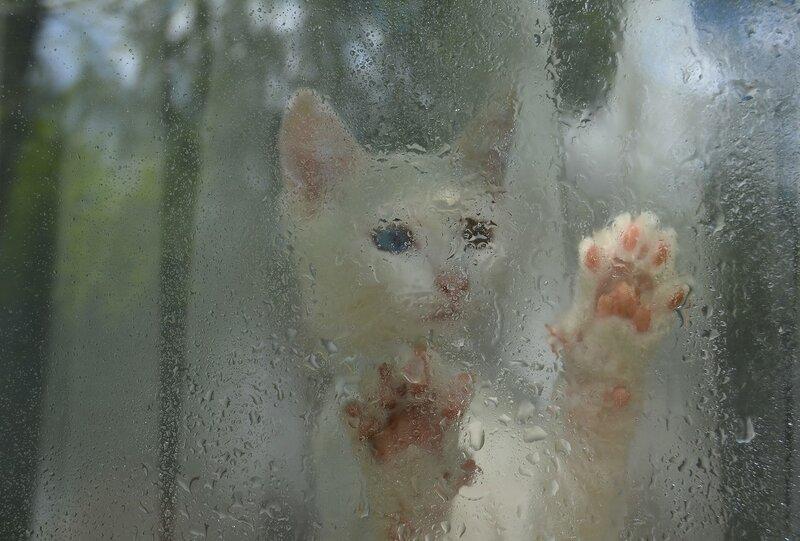 Рисуя дождик на окне...