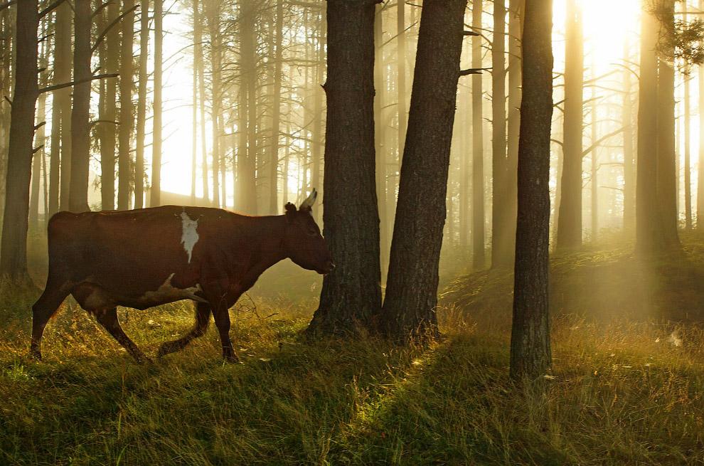 15. Природа тут, действительно, впечатляет своей красотой, первозданностью и необычными для Лен