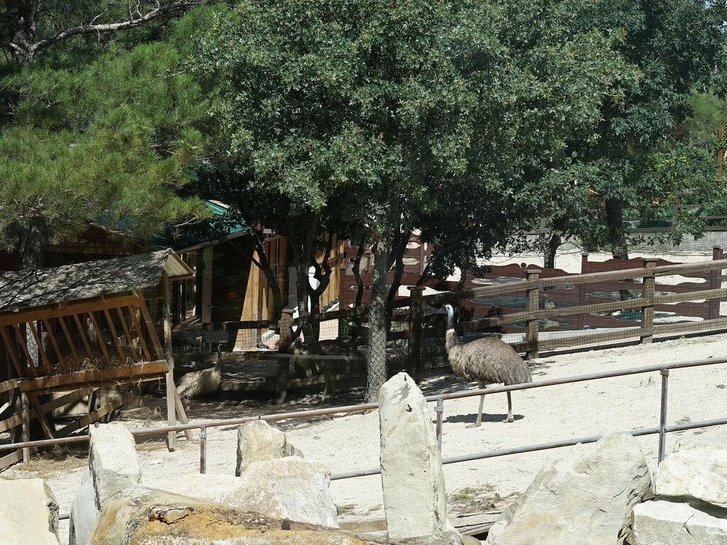 Страус в зоопарке. Сафари-парк, Геленджик.