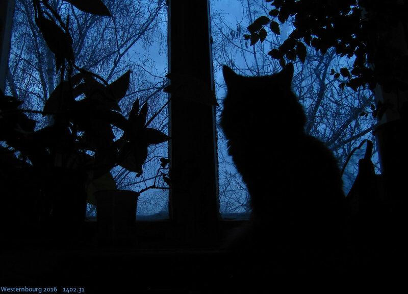 1402.31 Кот на окне. 28 мар. 2016 г.