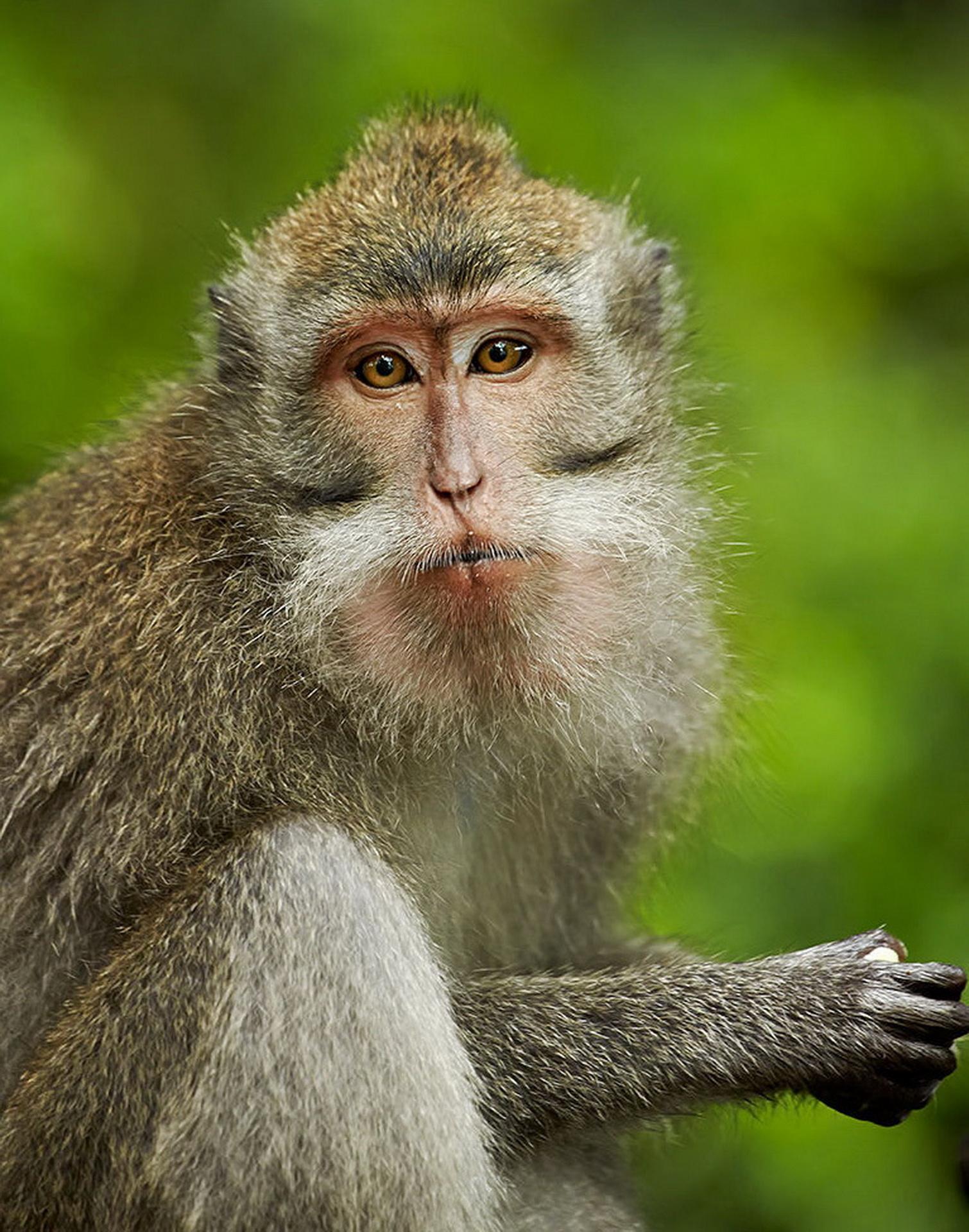 Портрет макаки