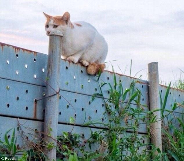 Не беспокойтесь, кошка не хочет проглотить столб. Просто сидит рядом.