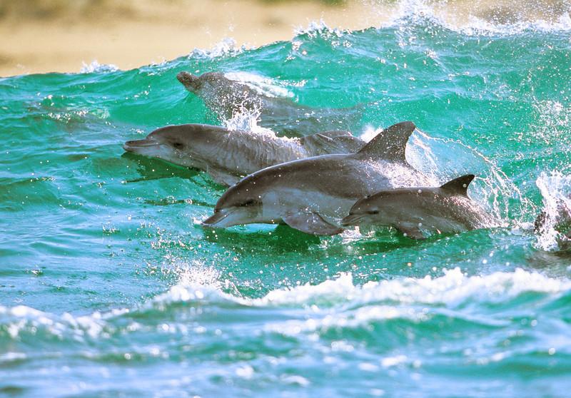 Дельфины — Фотограф Greg Huglin (99 фото)