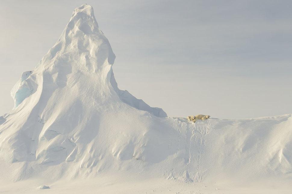 Почетное упоминание в категории «Природа» — Джон Роллинс, «Медведи на ледяной горе» (Bears on a Berg