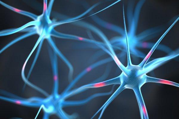 Стресс может привести кпотере памяти ислабоумию— русские ученые