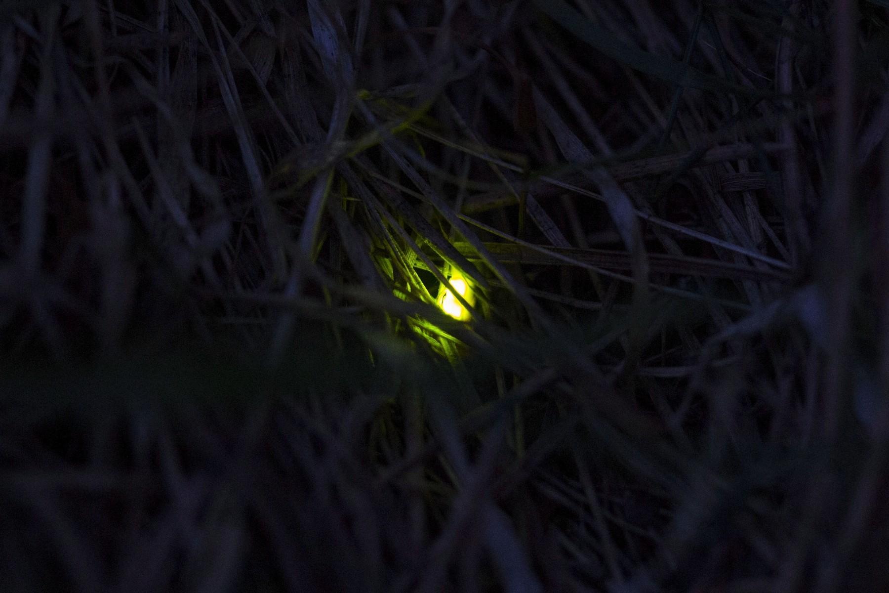 меня картинки светлячки в банке на траве предупредил