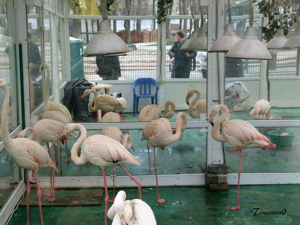 фламинго-2.jpg