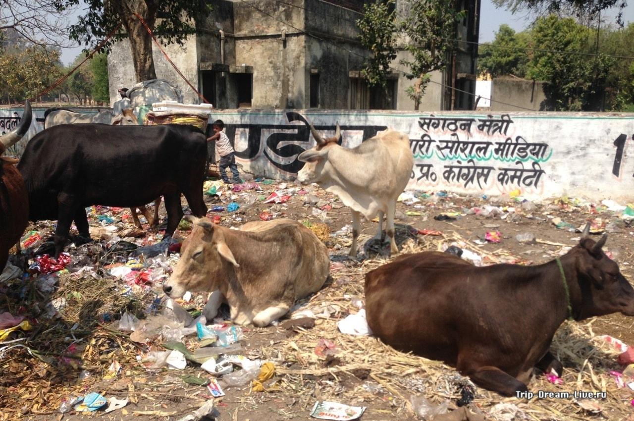 Всё что вам нужно знать о Лакхнау