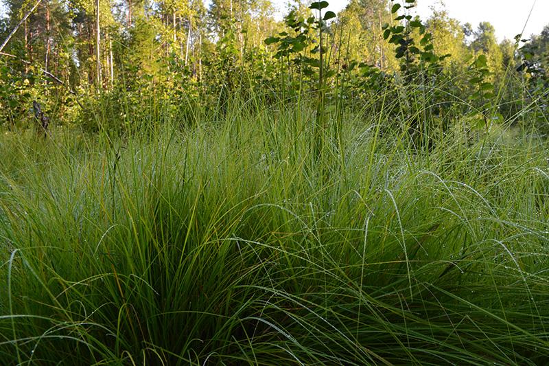 капли трава.jpg