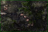 http://img-fotki.yandex.ru/get/62989/15842935.3bf/0_eee62_41daf87c_orig.jpg