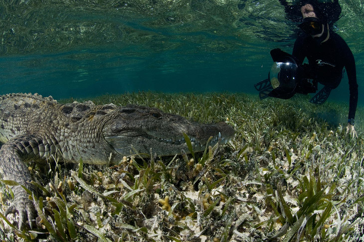 1. Вот он, наш крокодил. (Фото Rodrigo Friscione):