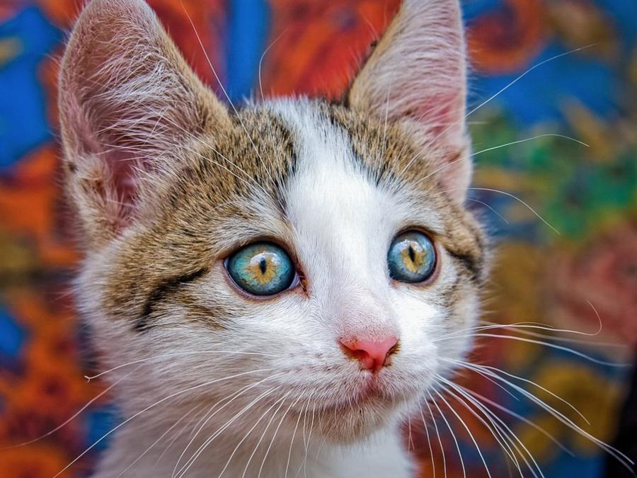 Фантастически красивые глаза