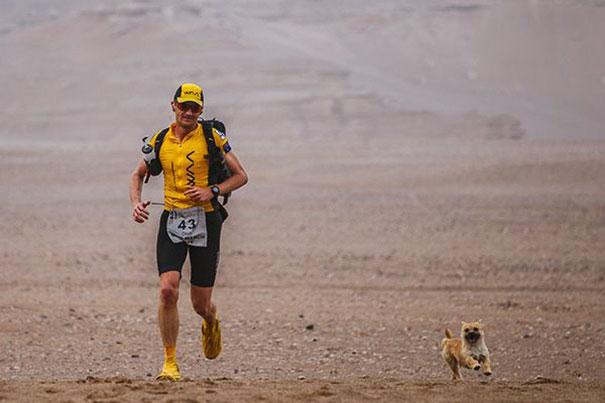 Бездомная собака пробежала за спортсменом 40 км во время марафона и обрела нового хозяина (8 фото)