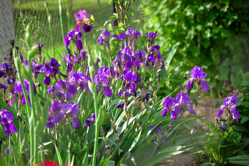 июнь, цветы