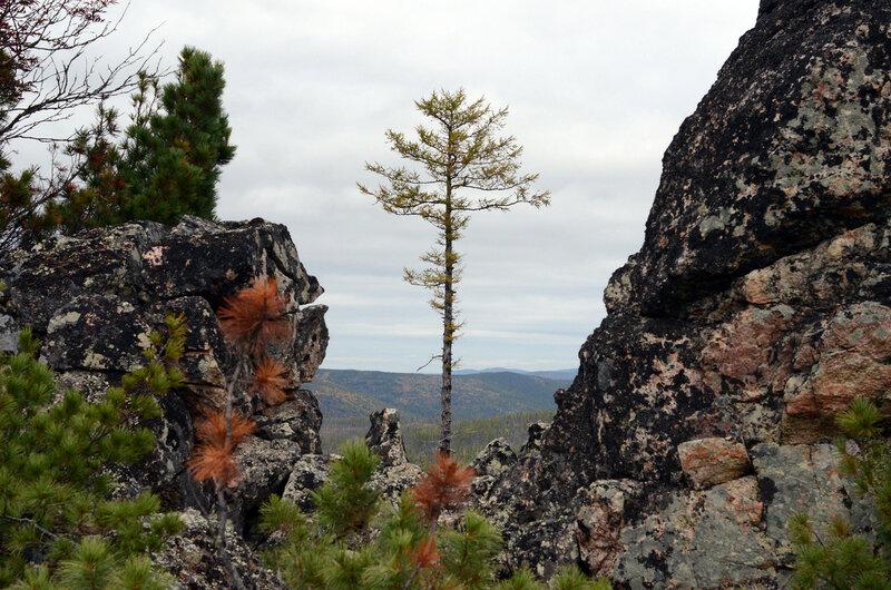 дерево в раме.jpg
