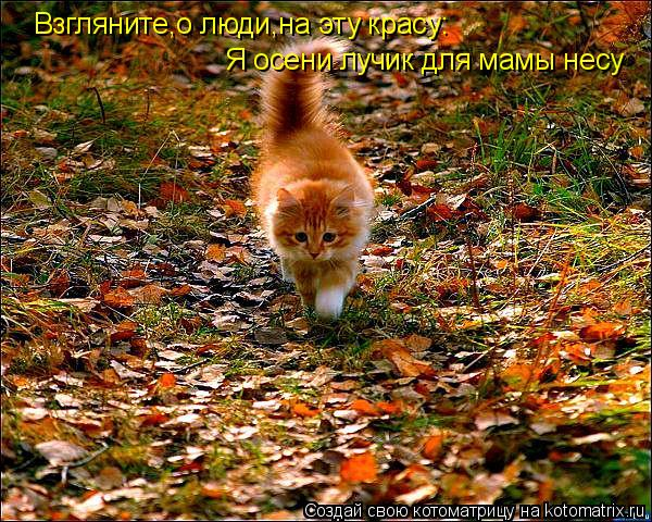 Осенние котики - море позитива!