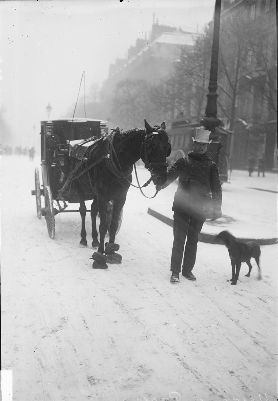 1908.  Лошадь, чьи копыты обернуты в мешковину, чтобы она не поскользнулась