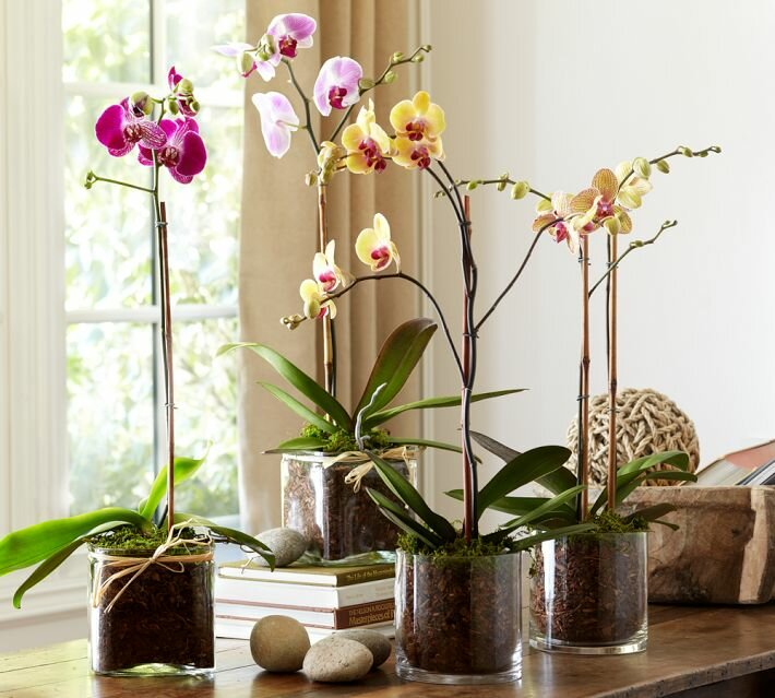 Орхидеи в интерьере квартиры фото дизайна
