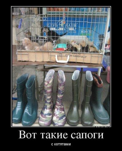 Демотиватор с котятами