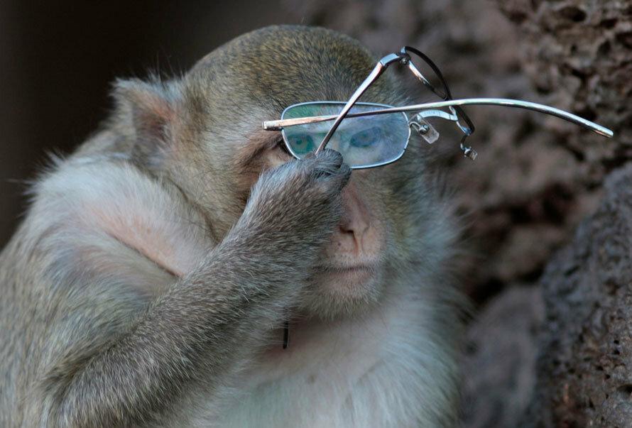 Мартышка научилась пользоваться очками и читает Чужой Вклад