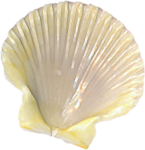 LaurieAnnHGD_SeaShell1.png