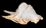 emka_ocean_element55.png