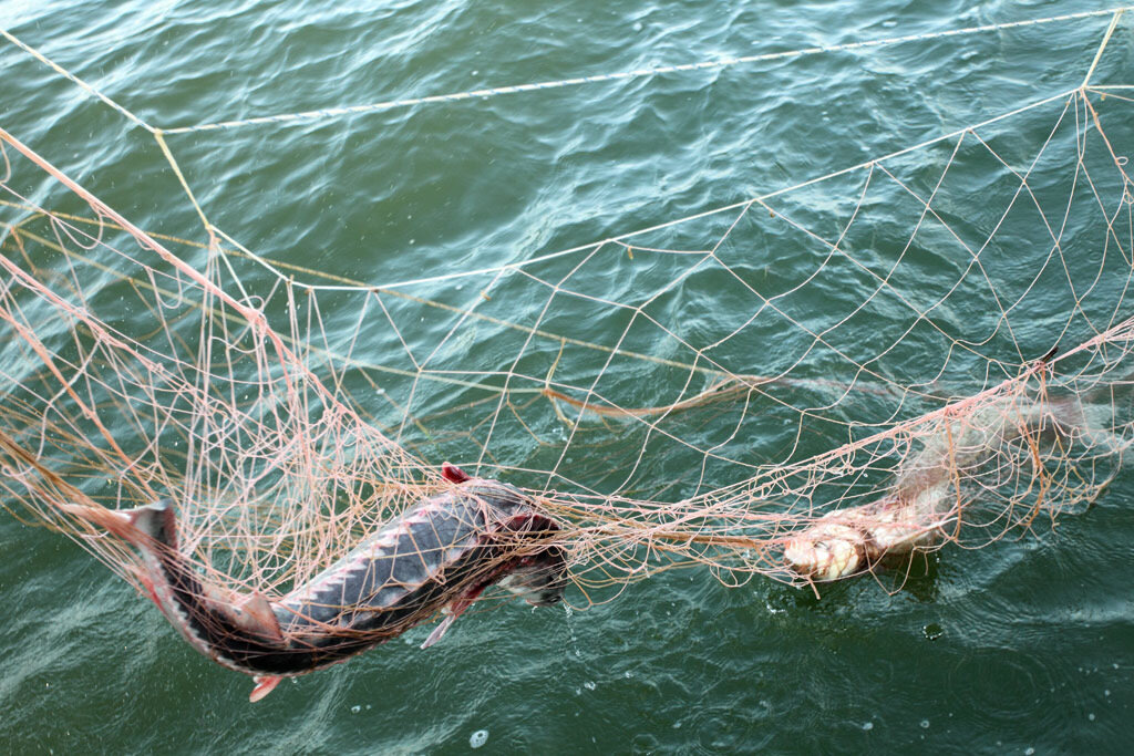Ямальские браконьеры заплатят около пяти миллионов за выловленную рыбу